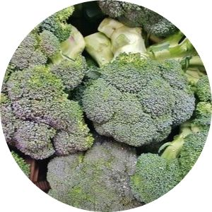 Calendario de siembra de Broccoli