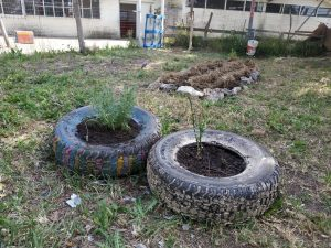 Cultivos protegidos por cerco de alambre