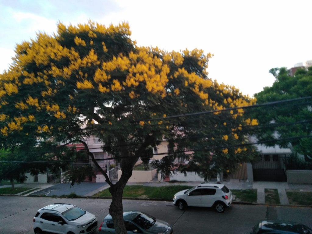 arbol en floracion