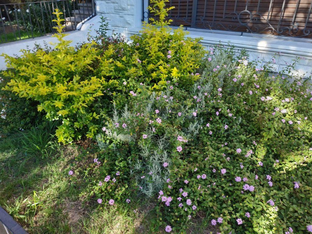diseno de jardin organico
