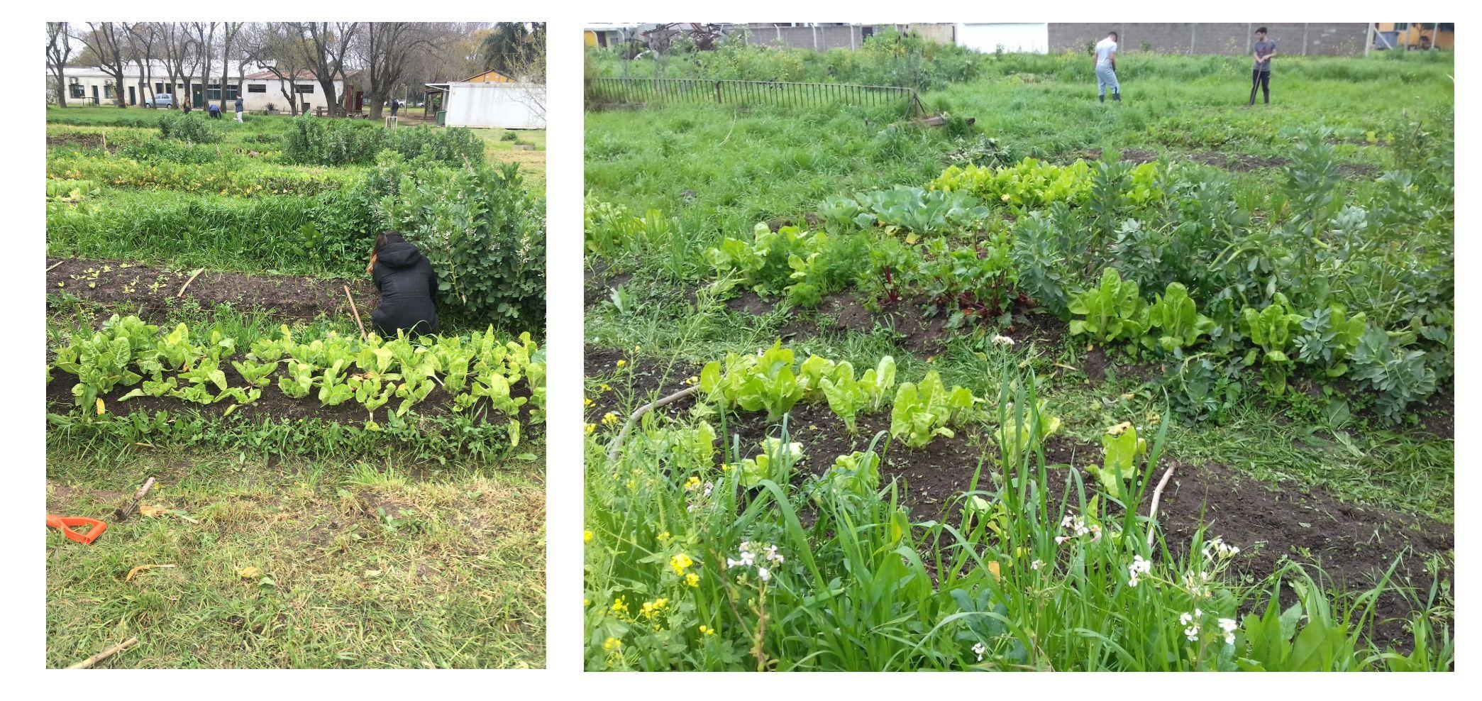 ejemplos de suelos agricolas