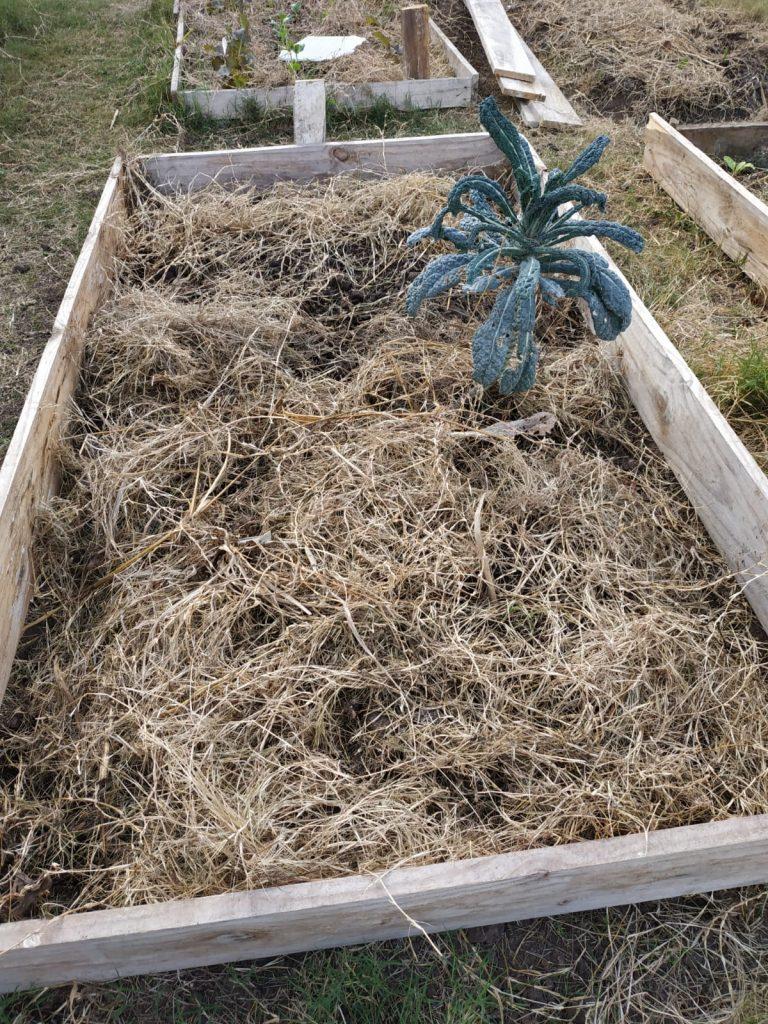 proteger suelos con cobertura seca