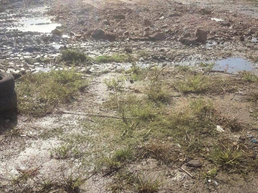 suelo arcilloso anegado