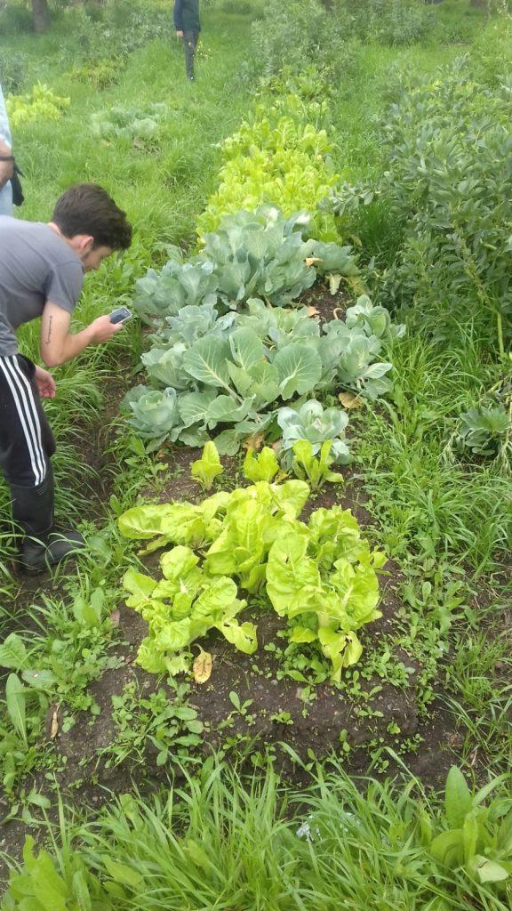 Biodiversidad al servicio del agricultor