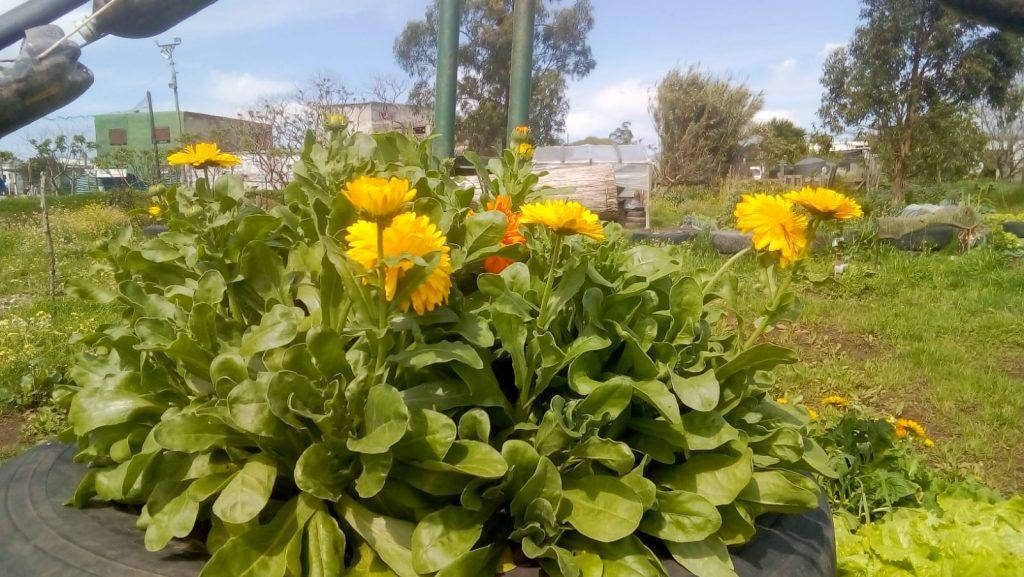 Biodiversidad de plantas en la huerta