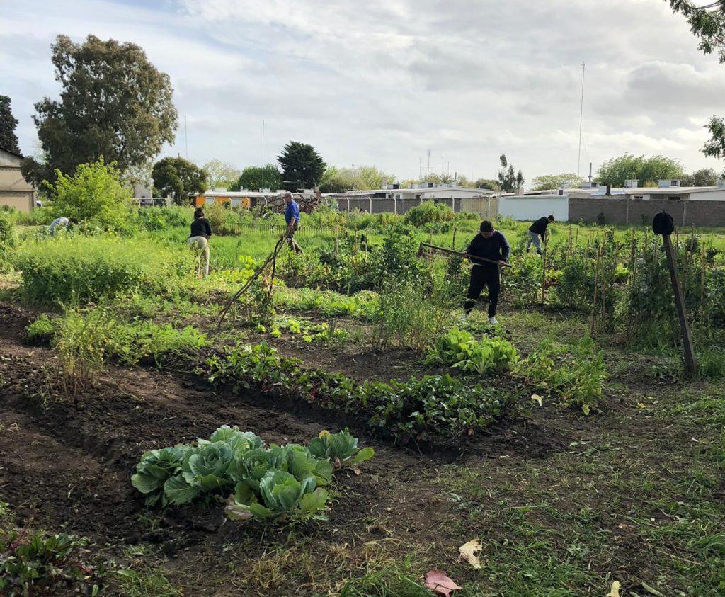 Prevenir enfermedades de las hortalizas